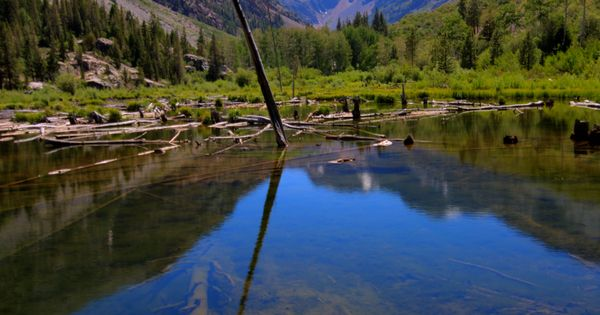 Beaver ponds in lundy canyon near yosemite photos i for Trout fishing ponds near me