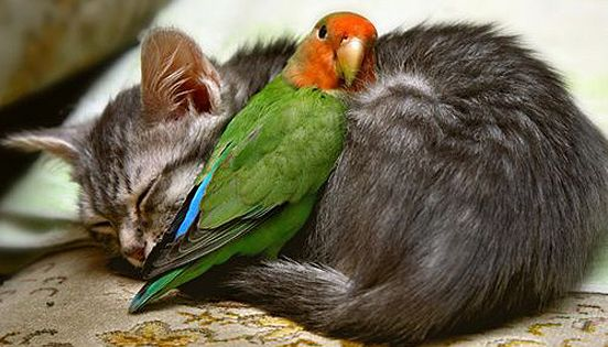 The odd couple -- parrot and cat! Precious!!!
