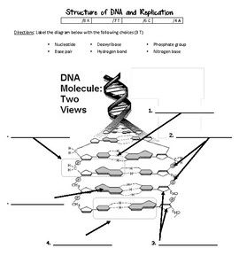 Dna Structure And Replication Worksheet Worksheets Dna Dna