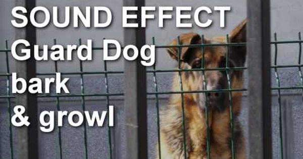 Guard Dog Growl And Bark Sound Effect Youtube Guard Dogs Dog Growling Dog Barking