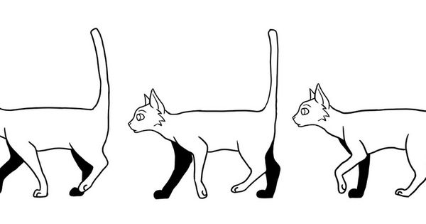 Animation For Cat