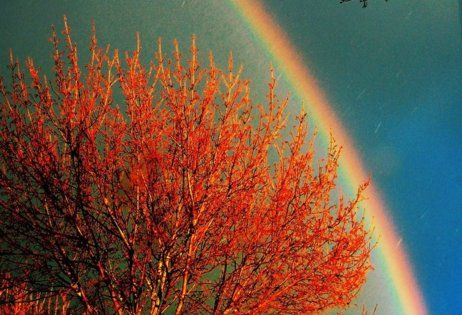 A tree is under the rainbow. That is a really beautiful place.