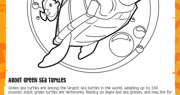 Green Sea Turtles Animal Jam Academy Creature Features