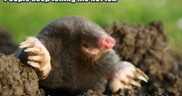 One Mole S Dream Mole Repellent Getting Rid Of Gophers Mole