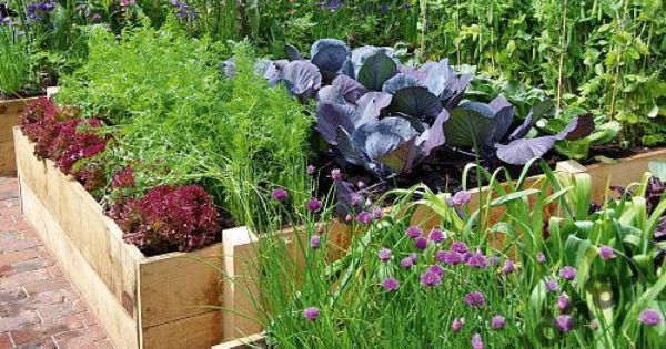 Pin By Arizona Grey On Gardens Plants