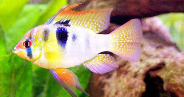 Freshwater Tropical Fish Pictures Tropical Fish Pictures