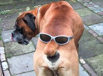 Hahahaha!!!!!!! | Image drôle chien, Animaux drôles, Chats et chiens drôles