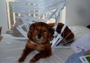 Dog Proof Blinds And Window Treatments Cat Proofing Dogs Funny Dog Pictures
