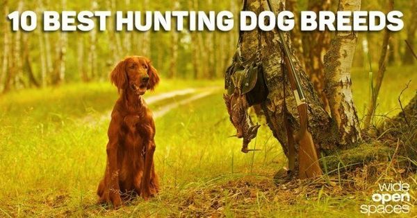 The Best Hunting Dogs