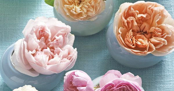 Lush english roses in soft pastels are universally pleasing