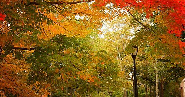 Autumn - Central Park, New York City teatime newyork centralpark