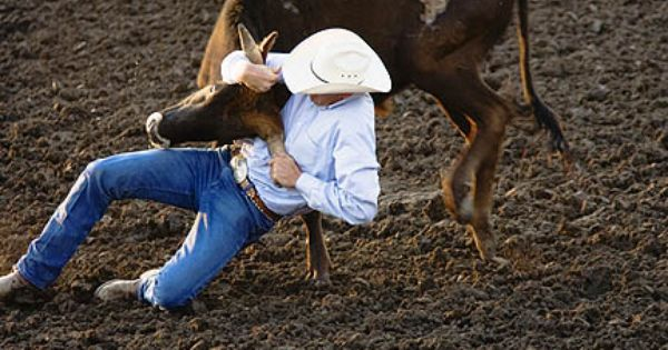 Cowboy Wrestling Steer To Ground At The Helena Rodeo