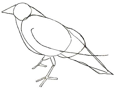 How To Draw A Crow Draw Step By Step Crows Drawing Crow