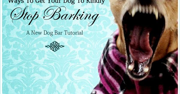 how to get a dog to stop barking at you