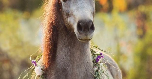 If I had a horse, I would put flowers in her hair.
