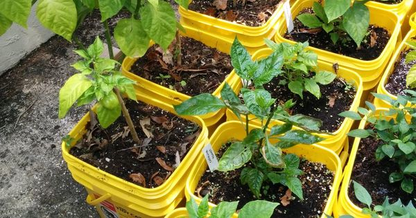 Uses for cat litter buckets google search gardening
