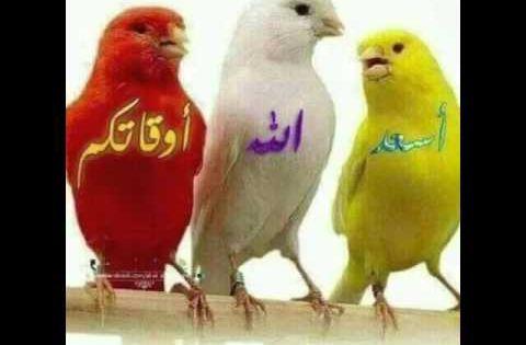 Pin On Arabische Musik