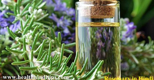 Rosemary Meaning In Hindi Rosemary In Hindi And Rosemary Plant Hindi Name Rosemary Meaning In Hin Essential Oils Rosemary Home Remedies For Acne Oils For Skin