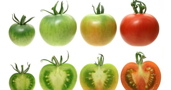 Commercial tomatoes have been bred for bright red color, but have lost