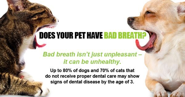 How To Ensure Good Dental Hygiene For Dogs