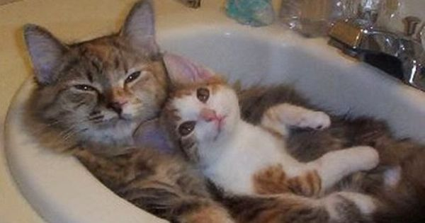 """Kitty lover. """" I love bath time with mommie!"""""""