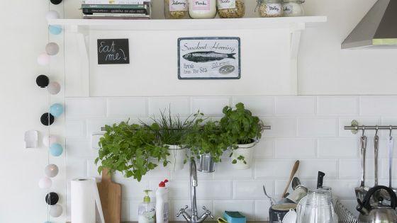 Faitez entrer un bout de jardin l 39 int rieur en cultivant - Herbes aromatiques en cuisine ...