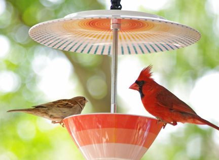 DIY Bird Feeder. Drill and drill bit, Bowl and Plate (or use