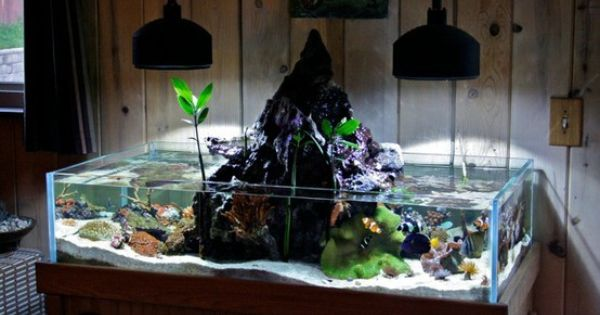 Cool fish tank pets pinterest fish fish tanks and for Cool fish tank