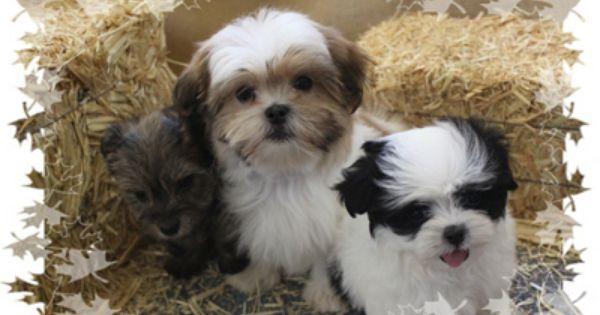 Twee Knappe Boomers Schattige Dieren Honden Huisdieren