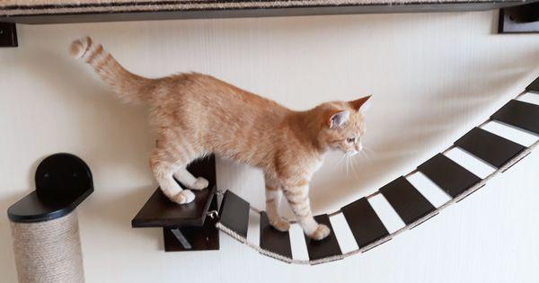 Katze Regal Wand Halterung Katze Wandmobel Katze Regale Brucke Etsy Cat Climber Cat Shelves Cat Climbing Tree
