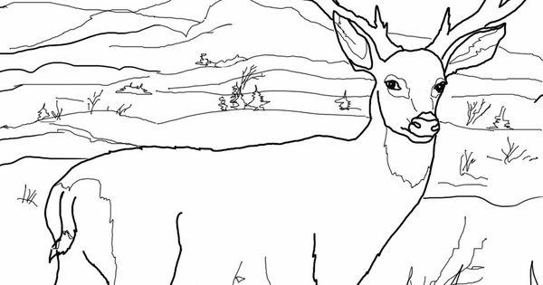 coloring pages mule deer - photo#25