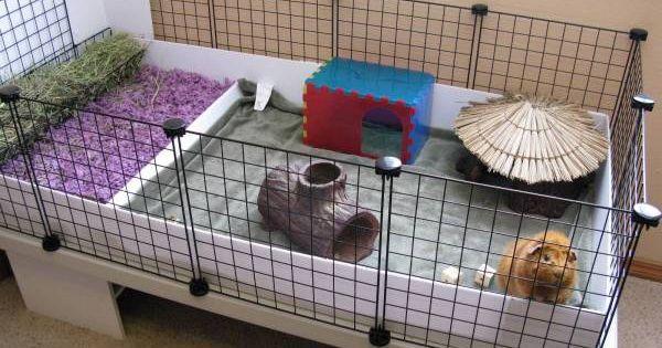 partie liti re cosy grande mangeoire cochon d 39 inde. Black Bedroom Furniture Sets. Home Design Ideas