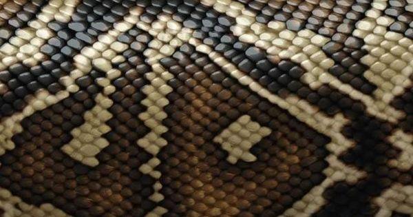 snake skin texture iphone wallpaper iphone wallpapers 2