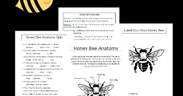 honey bee anatomy printables honey bee unit study resources. Black Bedroom Furniture Sets. Home Design Ideas