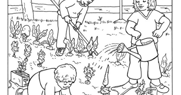 Coloring Page Of A Vegetable Garden Food Pinterest