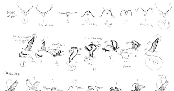 Character Design Session : Martin k animation animals creatures session