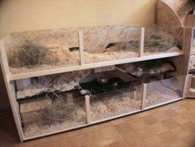 Innenhaltung Fotos Indoor Rabbit Bunny House Rabbit Playground