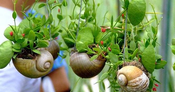 Snail shell planter. Fairy garden