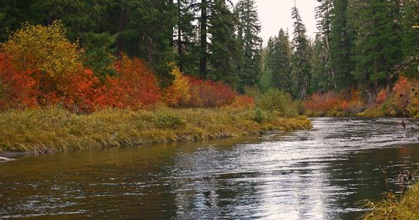 Rogue river oregon wouldn 39 t mind having this as my for Rogue river oregon fishing