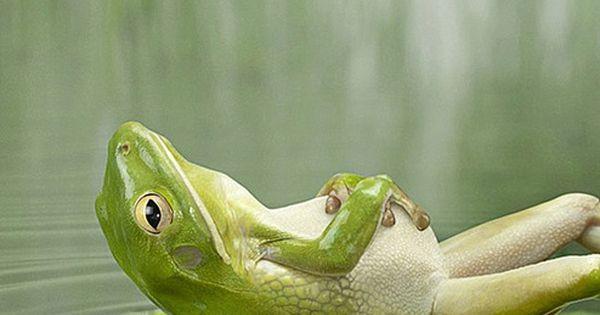 Relaxing frog.