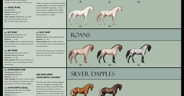 Equine coat colors by SheWolff - Bing Images. Some of them aren't