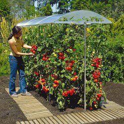 Tomatenhaus Selber Bauen Oder Kaufen Tomaten Garten Garten Garten Hochbeet