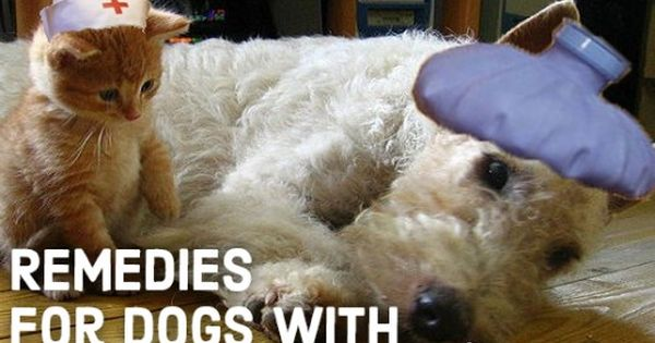 vet approved home remedies for upset stomachs in dogs bland diet and stomach problems. Black Bedroom Furniture Sets. Home Design Ideas