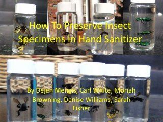 How To Preserve And Display Insect Specimens In Hand Sanitizer