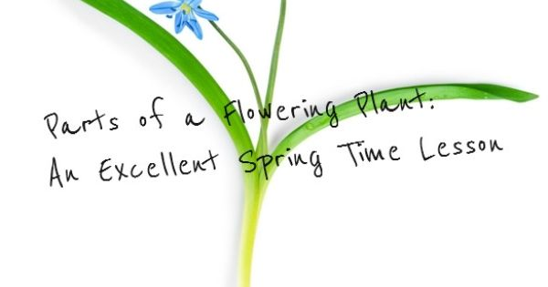 parts of a flowering plant  lesson plan for grades 2