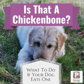 Dog ate chicken bones