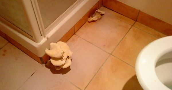 Mushrooms Growing In Bathroom Bathroom Stuffed Mushrooms Bathroom Drain