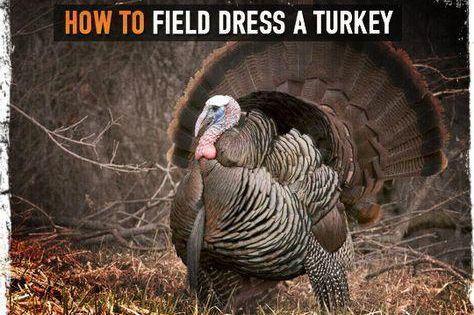 How To Field Dress A Turkey Bowhuntingwildturkey Hunting Turkey Hunting Bow Hunting