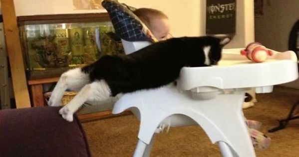 Hilarious Photos Of Pets Caught RedHanded Hilarious Photos - 23 hilarious photos of pets caught red handed