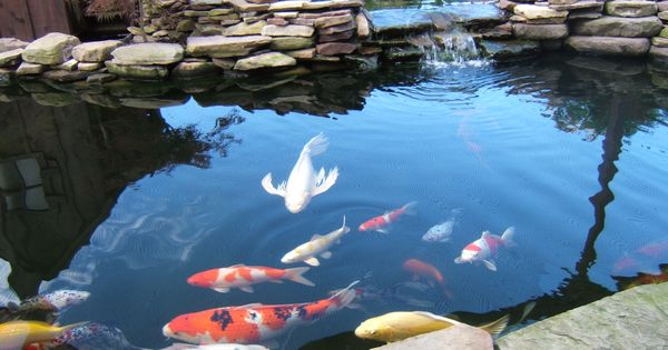 koi pond future home design pinterest jardins